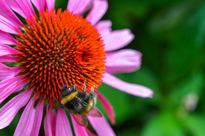 Summer Bee @ Downer drive - Sarratt, UK