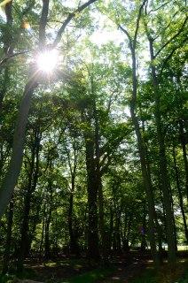 Lanscapes & Nature - https://personallyredefined.com/portfolio/landscape-nature/