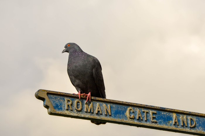 Pigeon points the way - St. Albans, UK (Worldwide Photo Walk)
